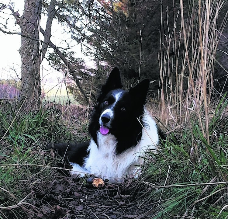 Jock the border collie feeling the cold. He lives in Tough, near Alford, with Fiona Milne.