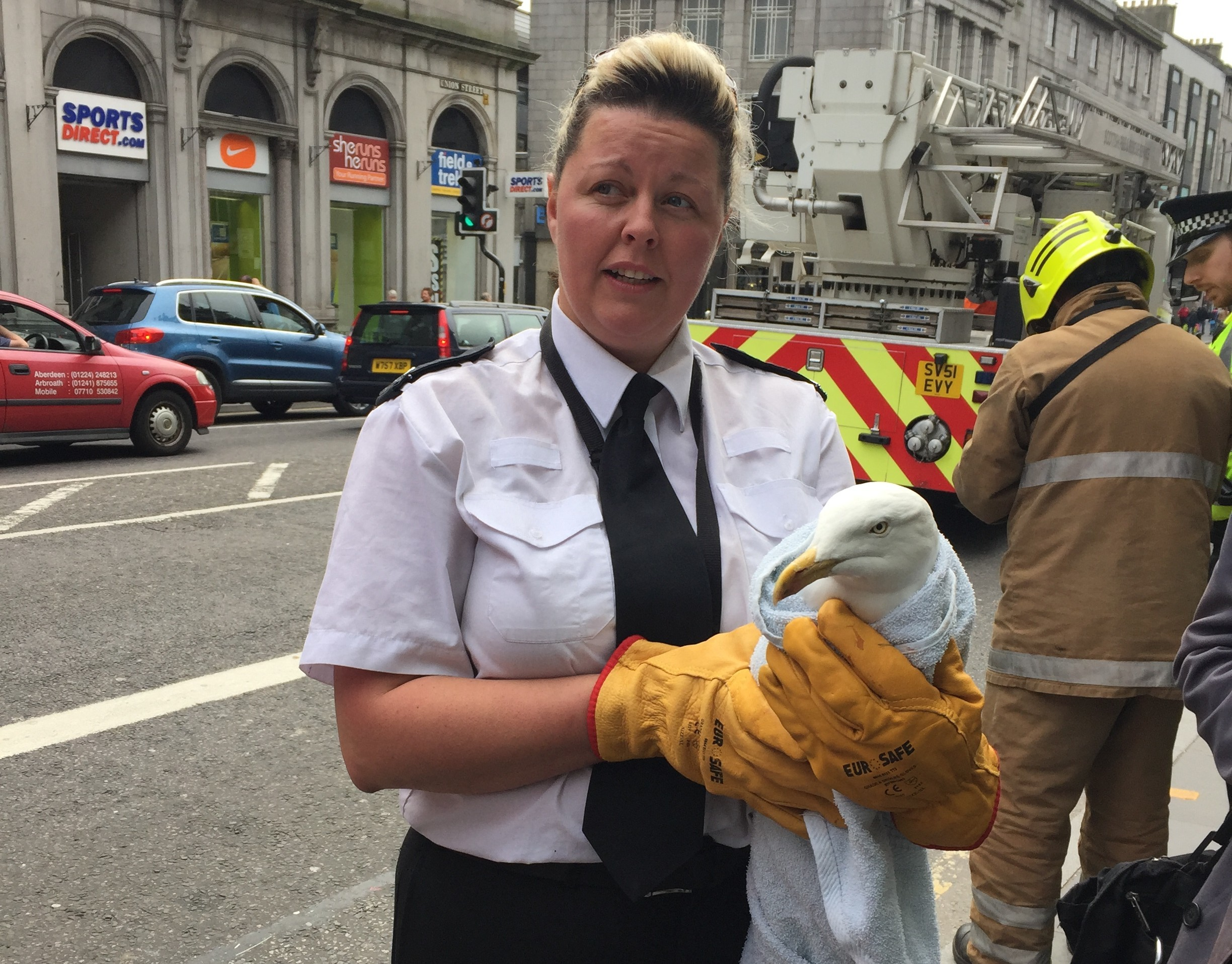 The gull was rescued from the building on Union Street