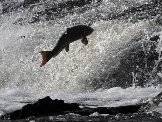 Salmon Falls Property Management