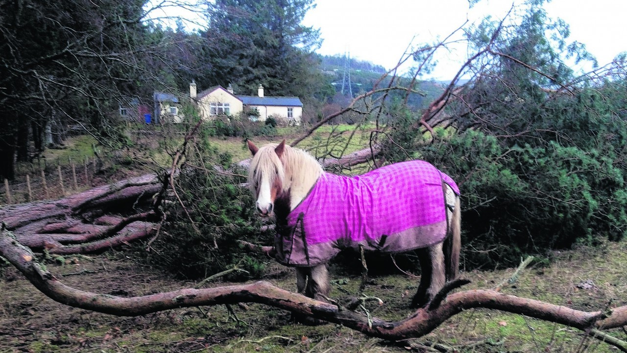 Chester checking out the fallen trees in his field after a storm. Chester lives in Gledfield, with the Bow family