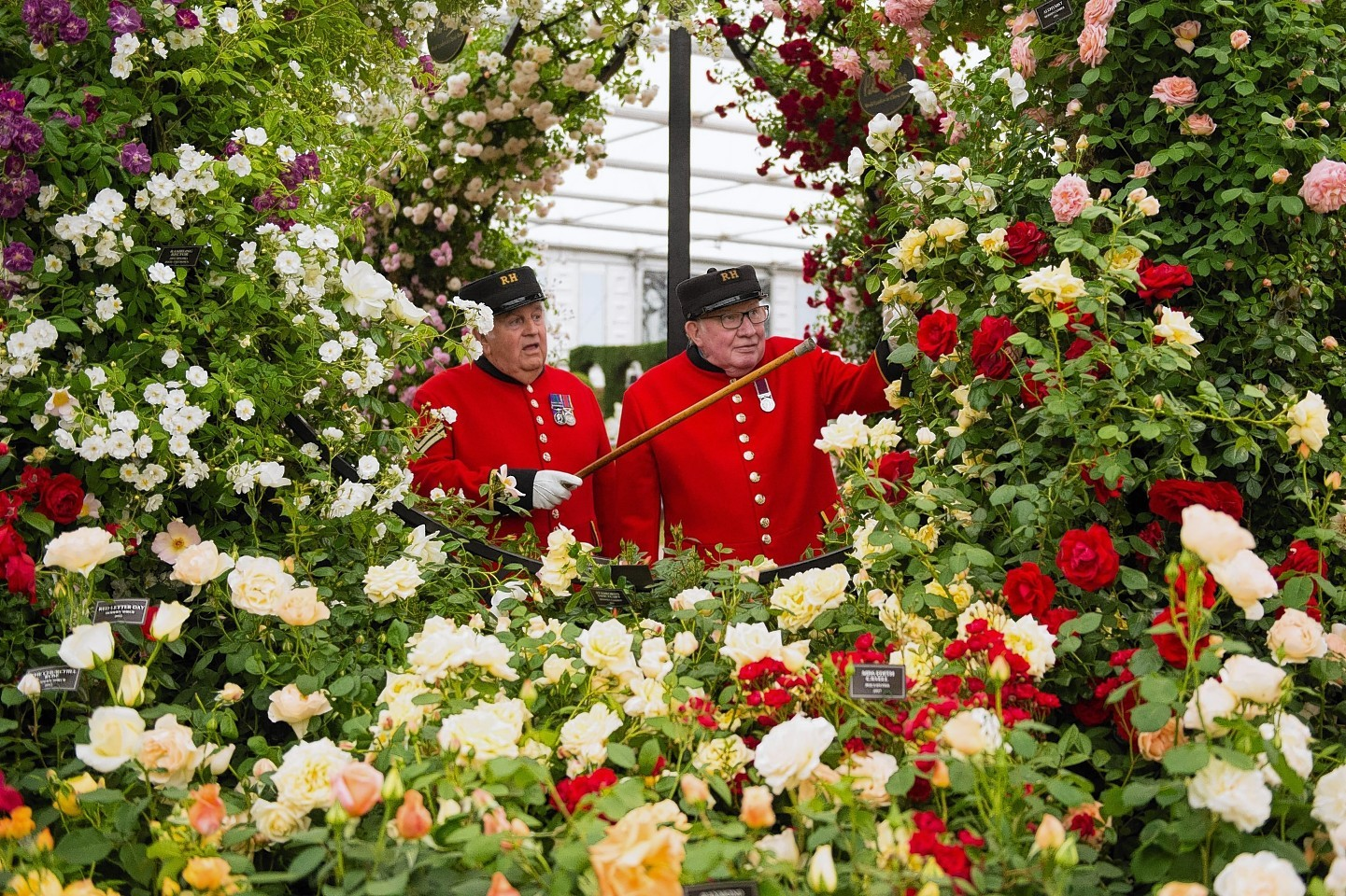 Chelsea flower show celebrities begin to arrive press and journal - Royal flower show ...