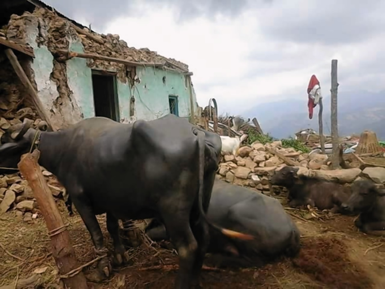 Nepalese farmers are struggling following last month's earthquake