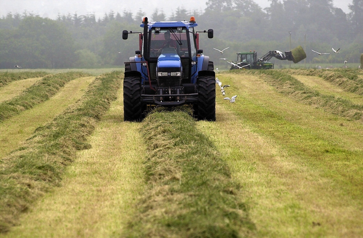 Many silage cuts are low in protein this year