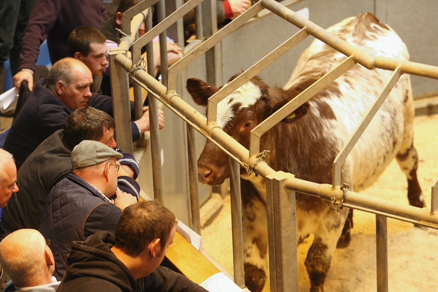 Moredun will fund livestock health and welfare projects