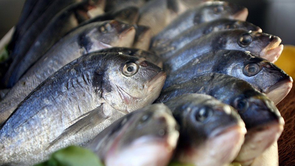 Scientists believe the fish of the future will be even harder to catch