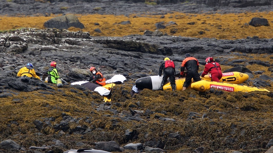 British Divers Marine Life Rescue tend to stranded pilot whales on the rocks of Staffin Island on the Isle of Skye.