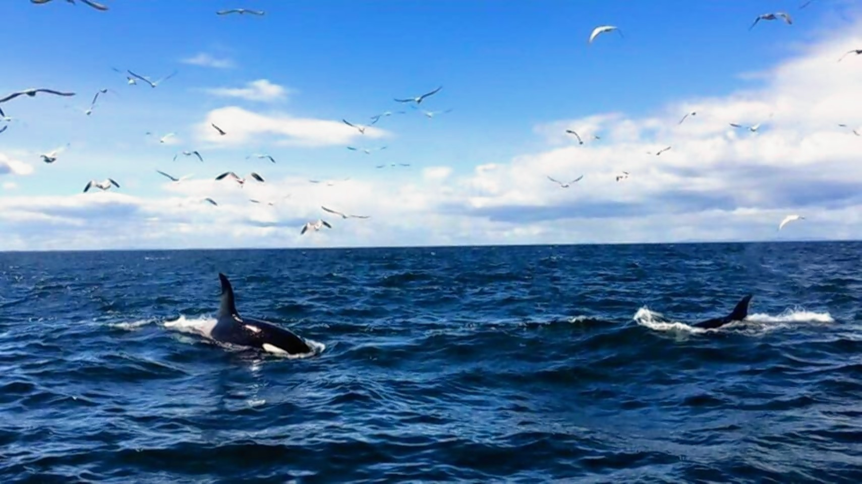 The killer whales were spotted off Portknockie