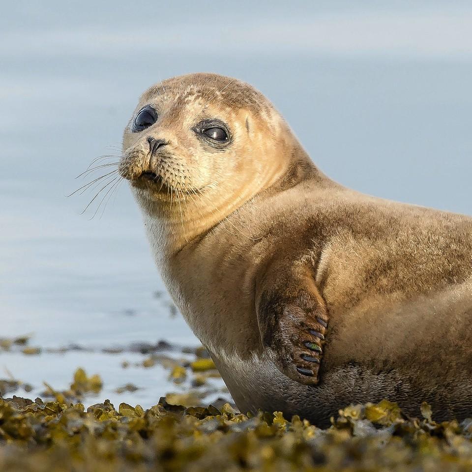 A sunbathing seal