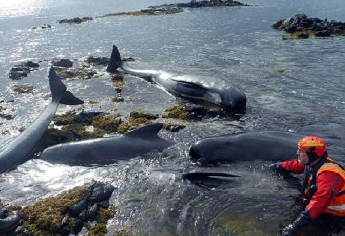 Three whales have died on Skye