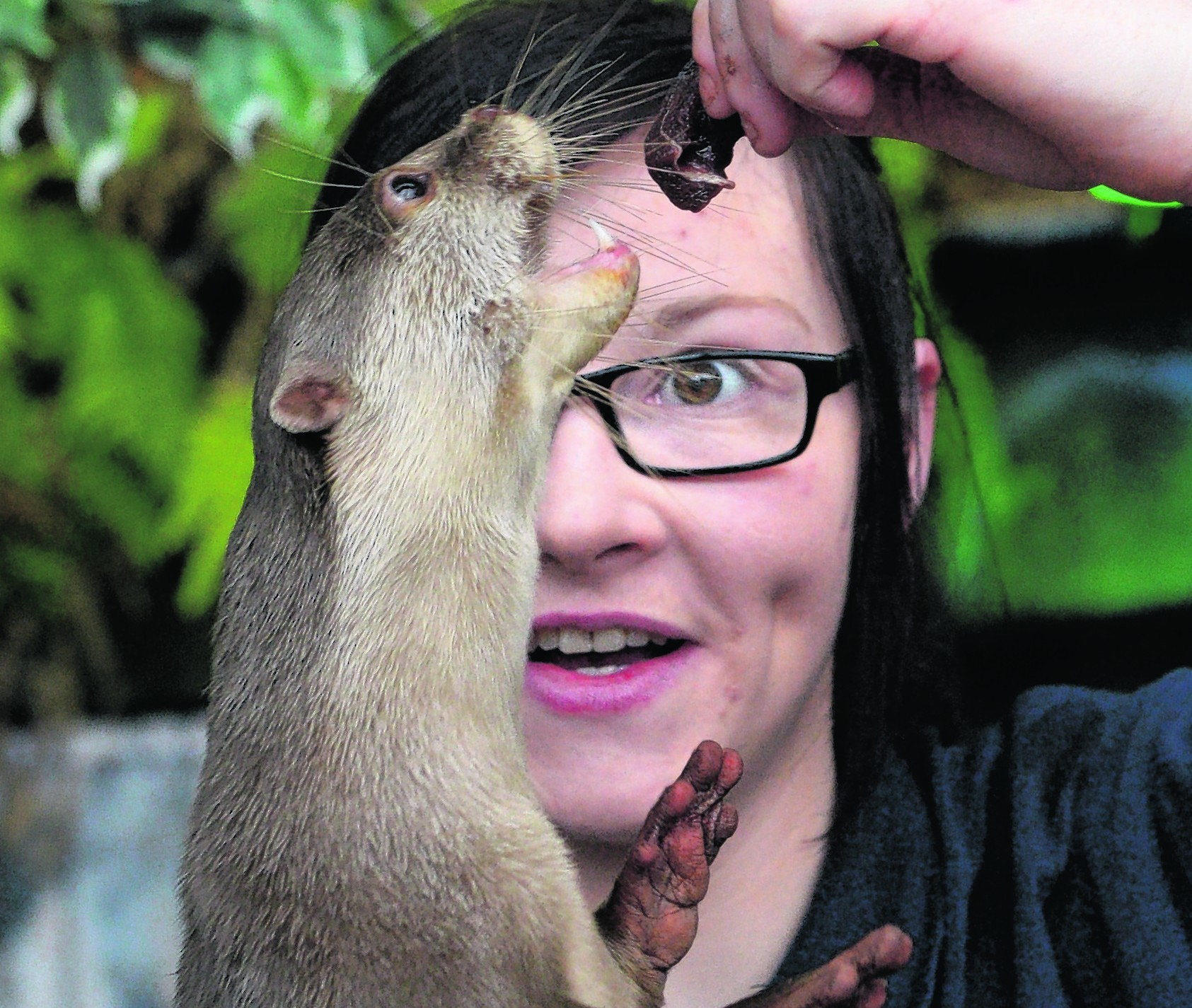 Robyn Hunter feeding one of the otters at Loch Lomond Sea Life Aquarium