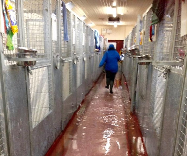 Flooding at Mrs Murray's Home dogs home