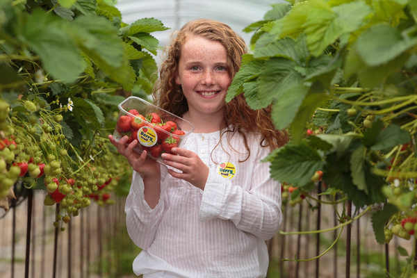 Honor Smith, age 10, at Barra Berries Farm, Oldmeldrum.