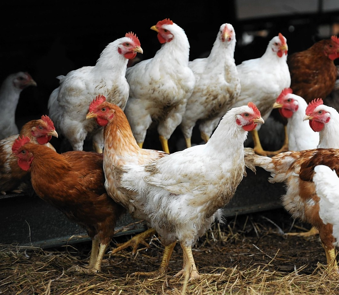 "Chickens ""crowing"" were one of the complaints the council investigated"