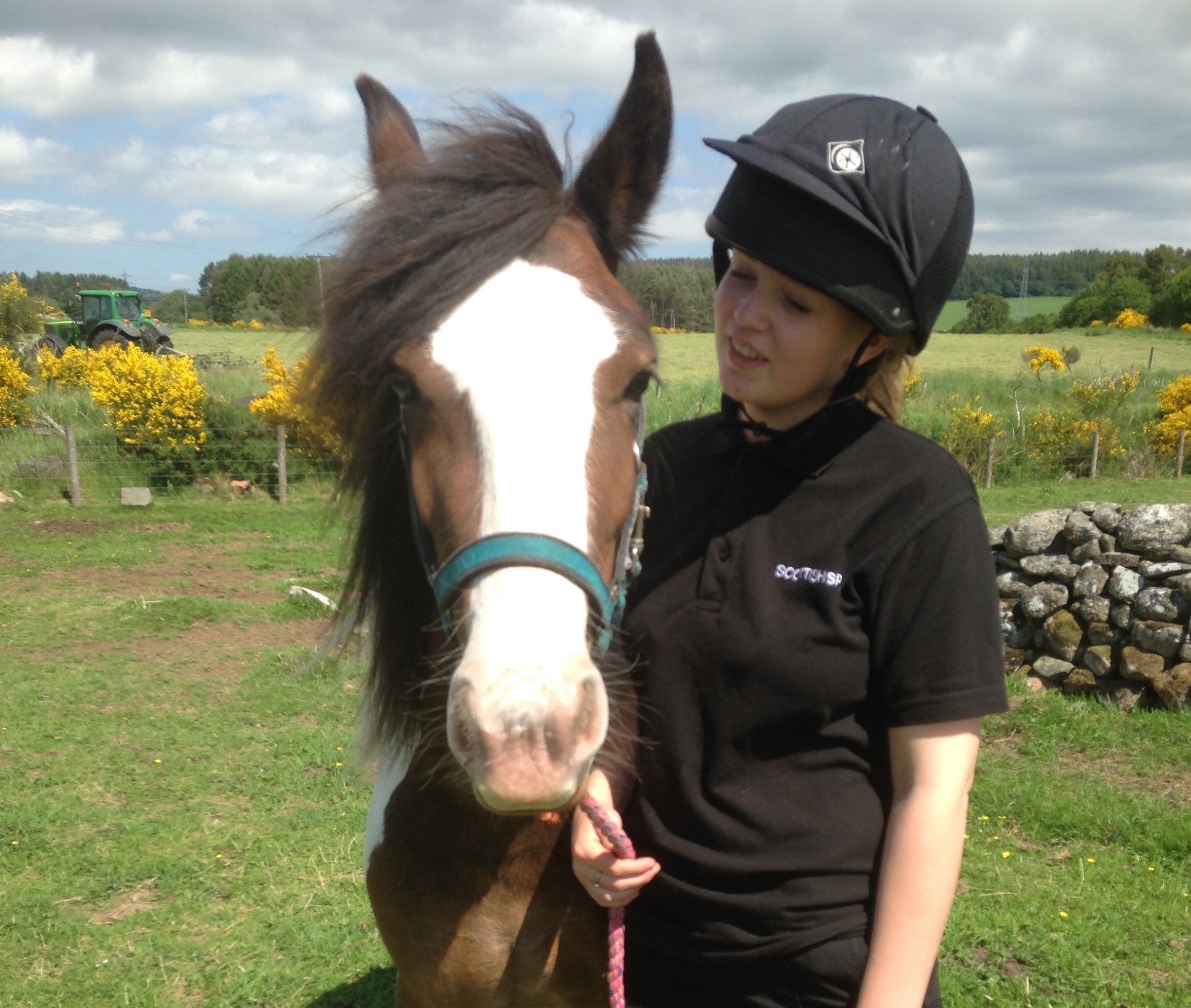 Three-year-old cob Romy is looking for a new home