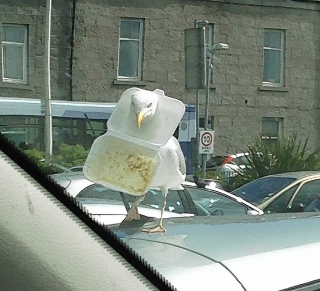 The picture of the gull in Aberdeen has gone viral
