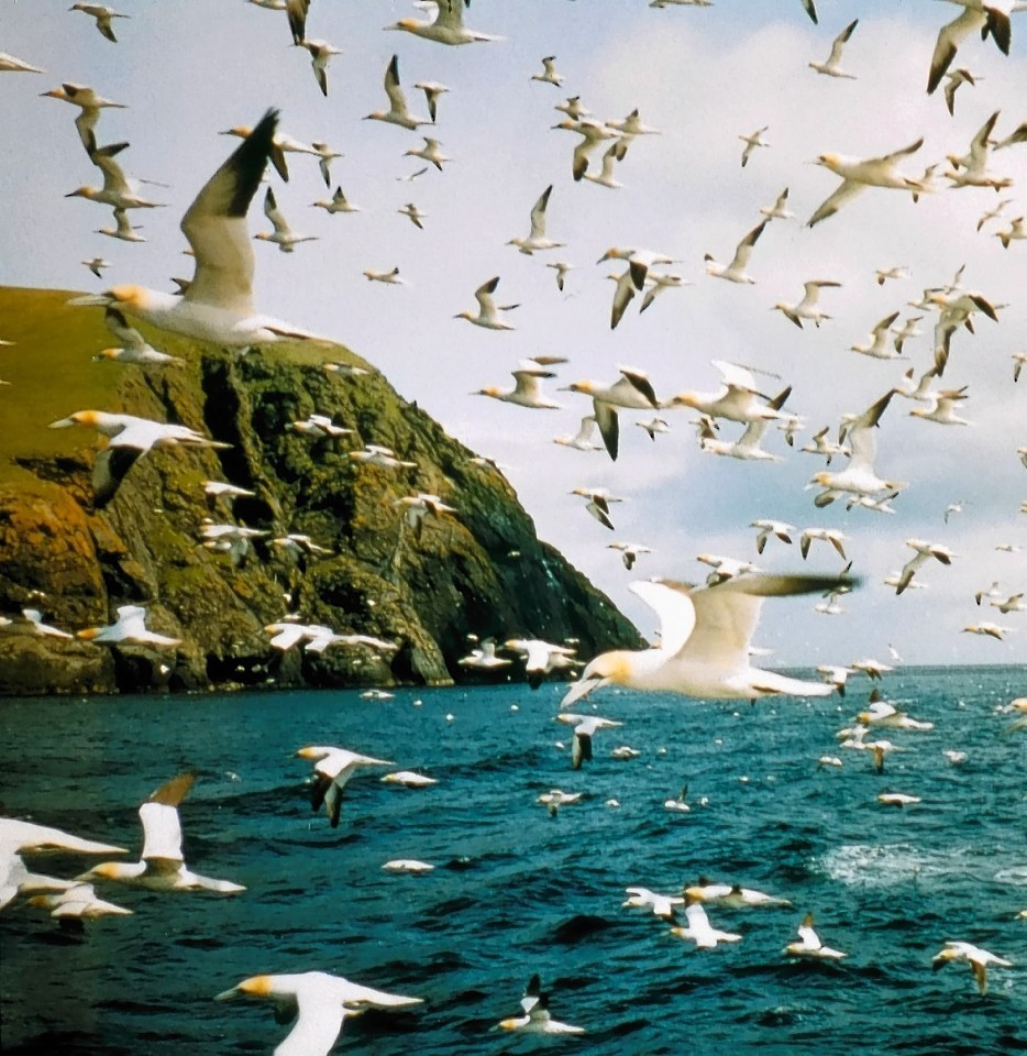 Plenty of birds have flown to St Kilda, can the group become the first to swim there?