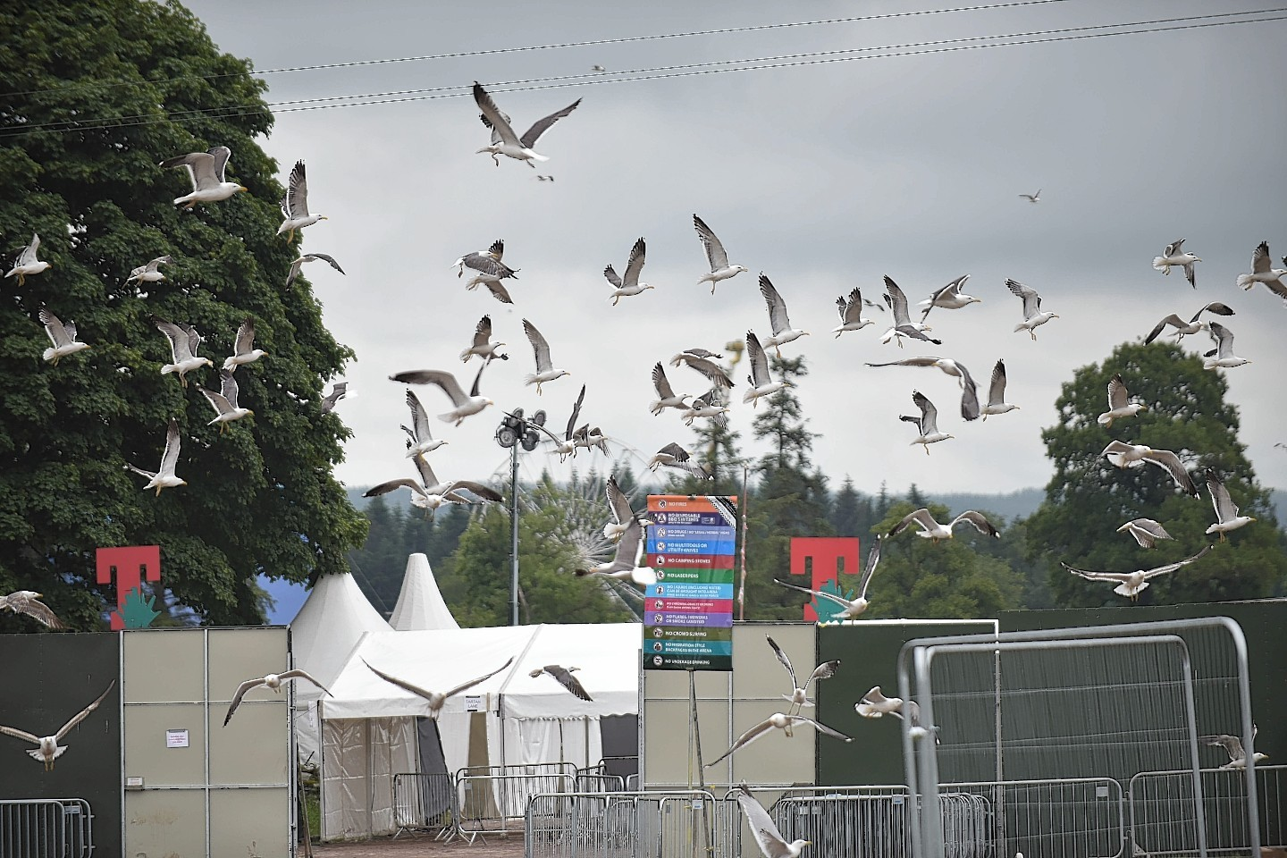 Seagulls are seen swarming near the entrance .
