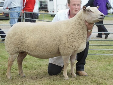 Bruce Ingram holds the Charollais champion which was crowned supreme sheep