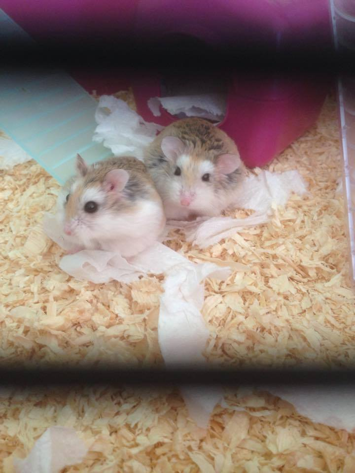 Staff at Moray Waste Busters found the tiny creatures in their cage
