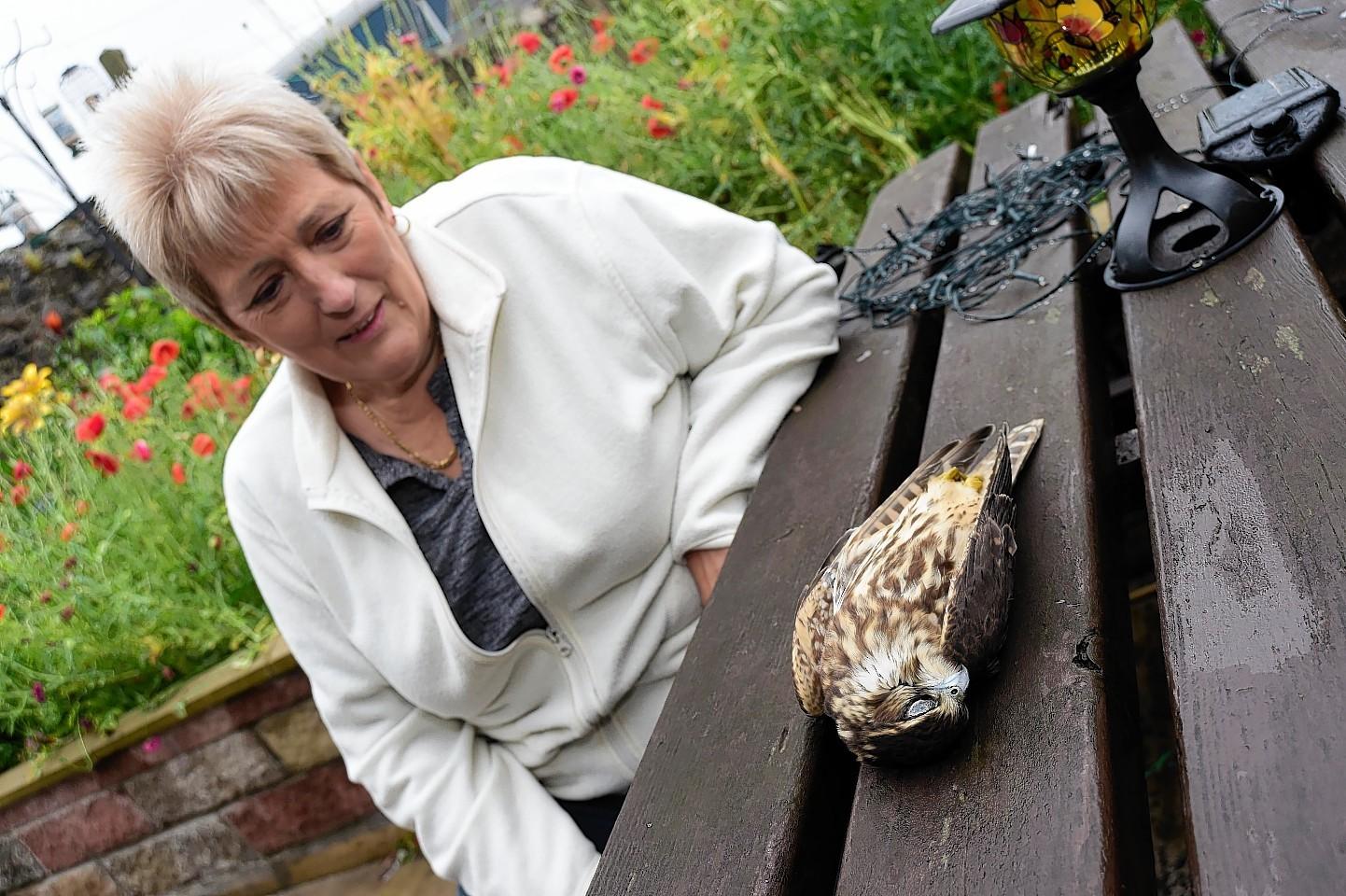 Maureen Thornton with the sparrowhawk