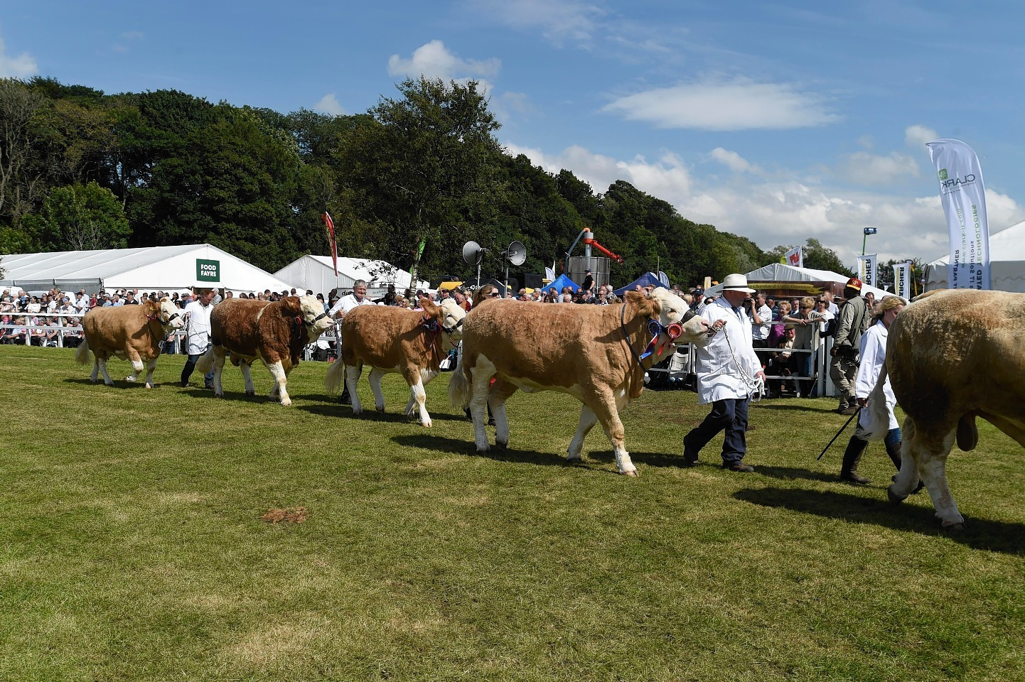 Cattle parade