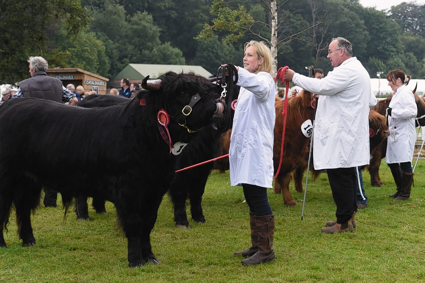 Judging at the show