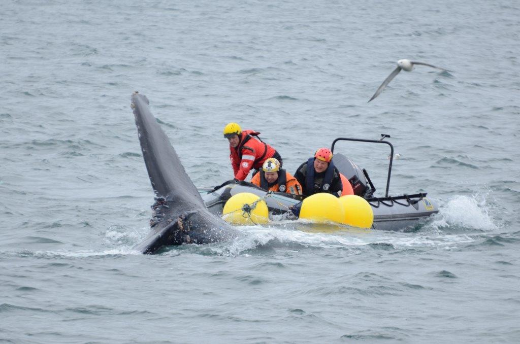 The rescuers were nearly knocked out of their boat by the distressed animal