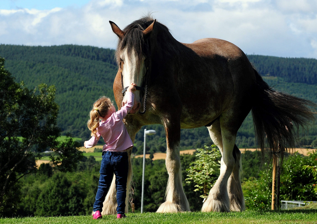 Digger, one of the largest horses in Europe, is one of the centre's biggest attractions