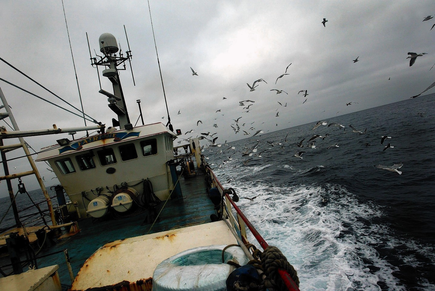 Birds could be dying because of trawl fishing