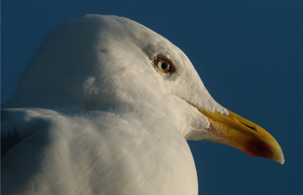 The gull is trapped on the top of a building on Palmerston Road