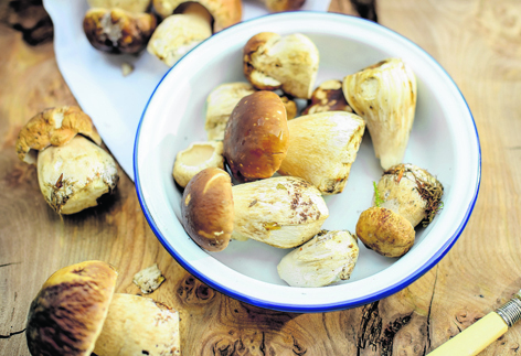 This year's ceps  have been exceptional