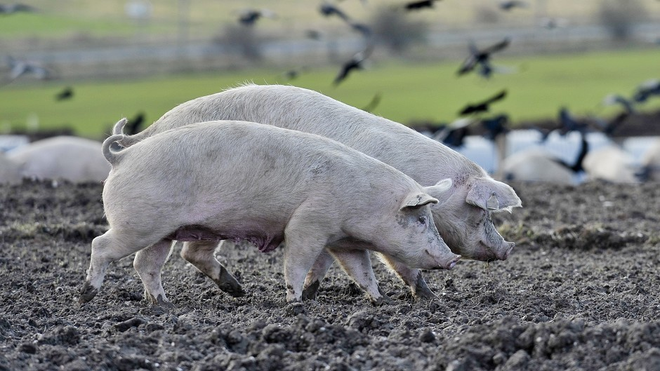 All QMS assured pig farms have signed up to the charter.