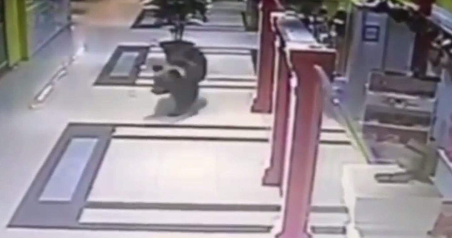The bear loose in the mall