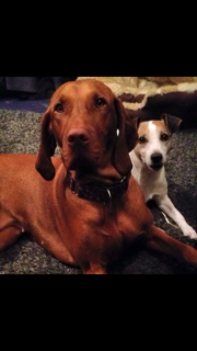 Brandy (Hungarian Vizsla) and Rosa (Parson Russle Terrier). They live with Gillian and Family in Durris.