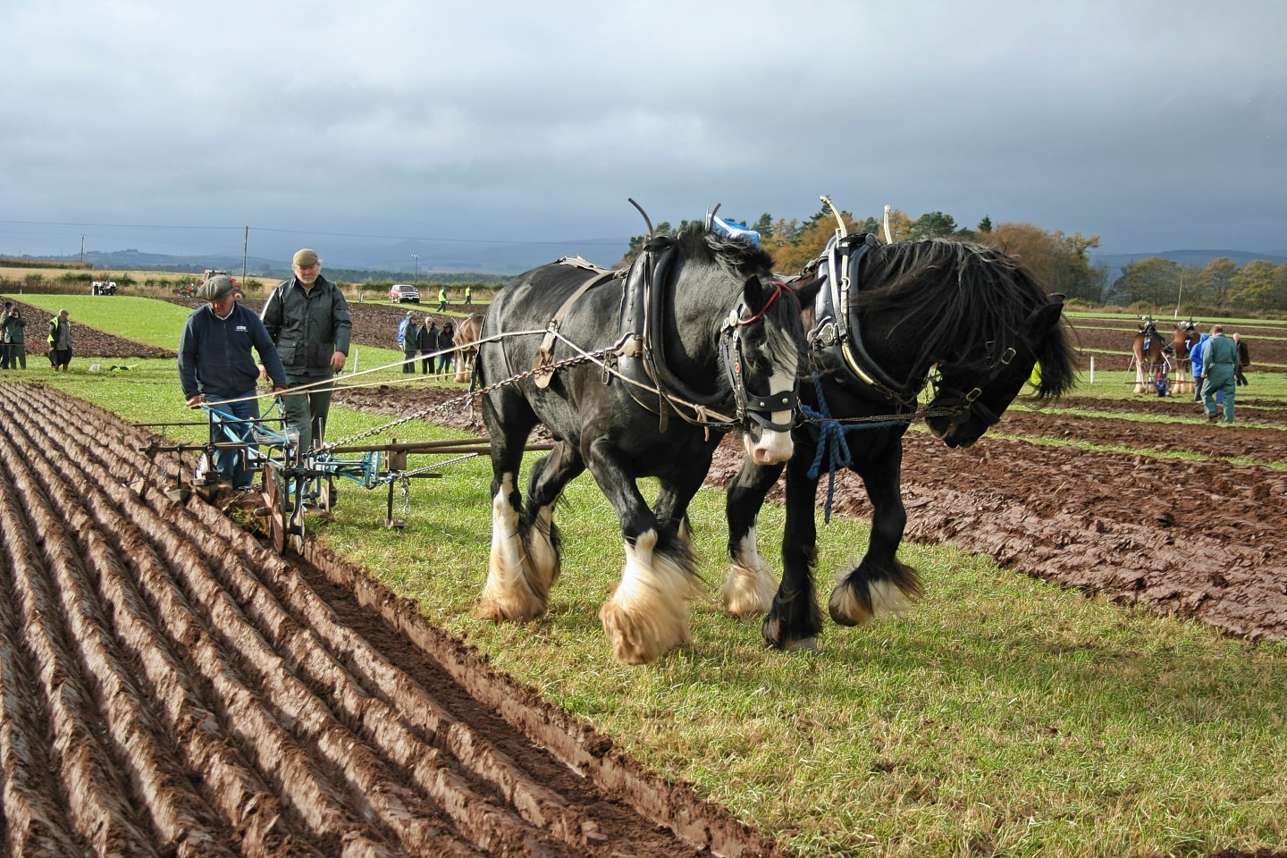 Jim Elliott with a pair of horses ploughing