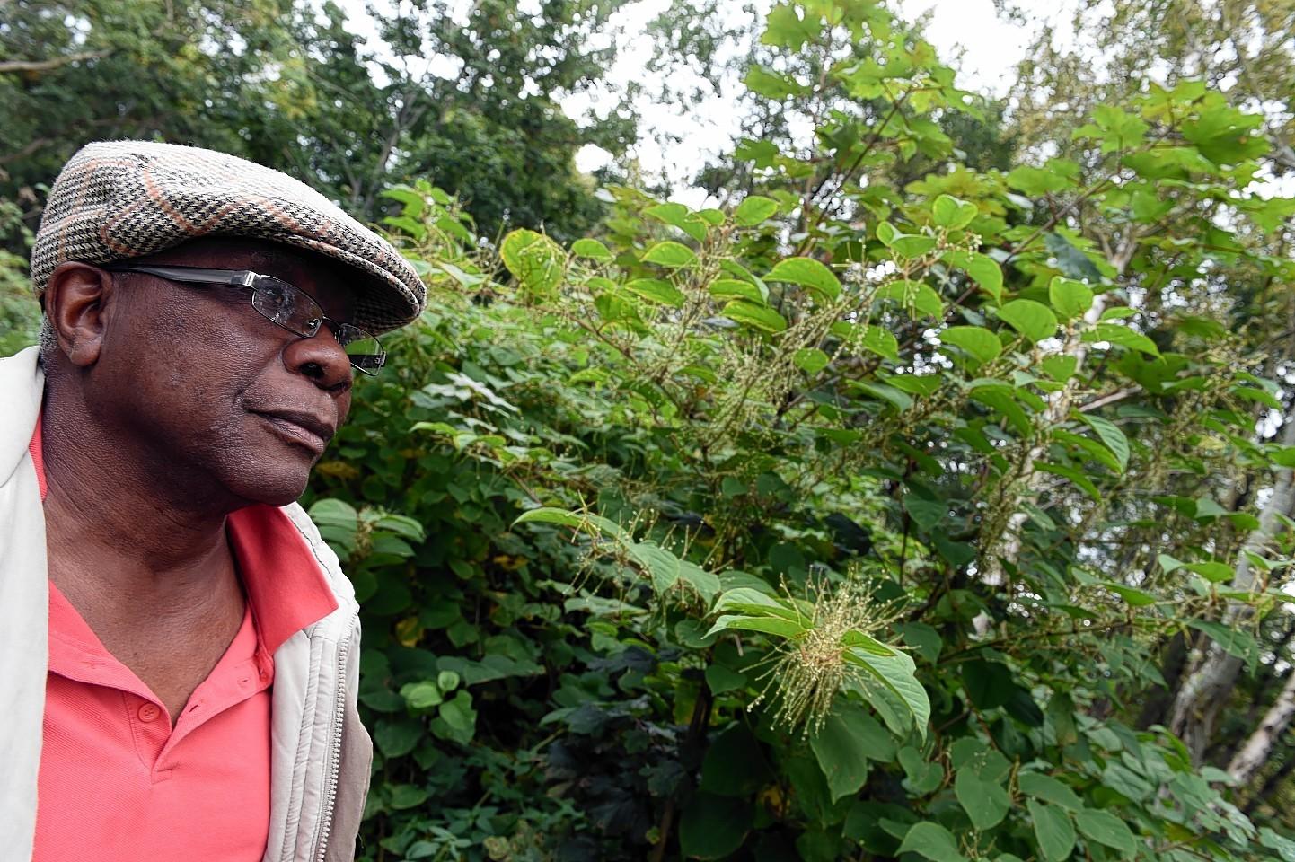 Lansana-hogweed