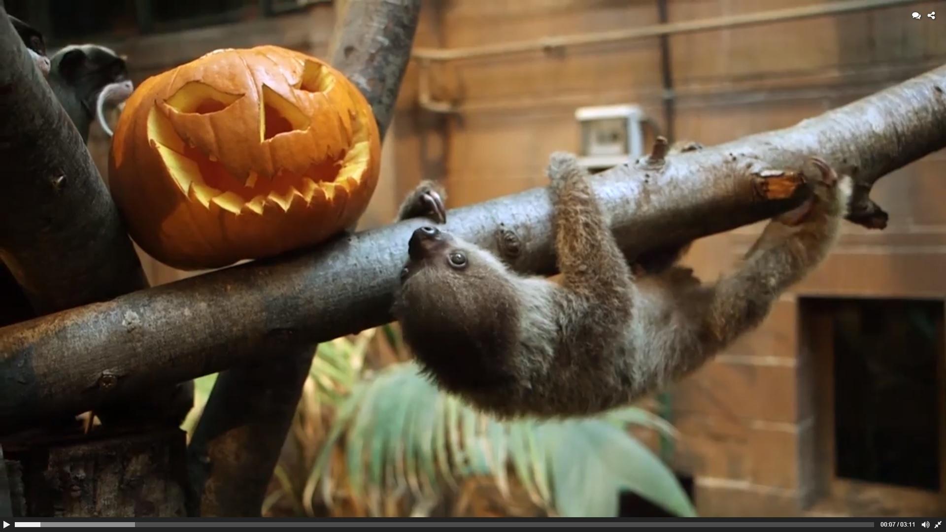 Monkey Sloth Halloween