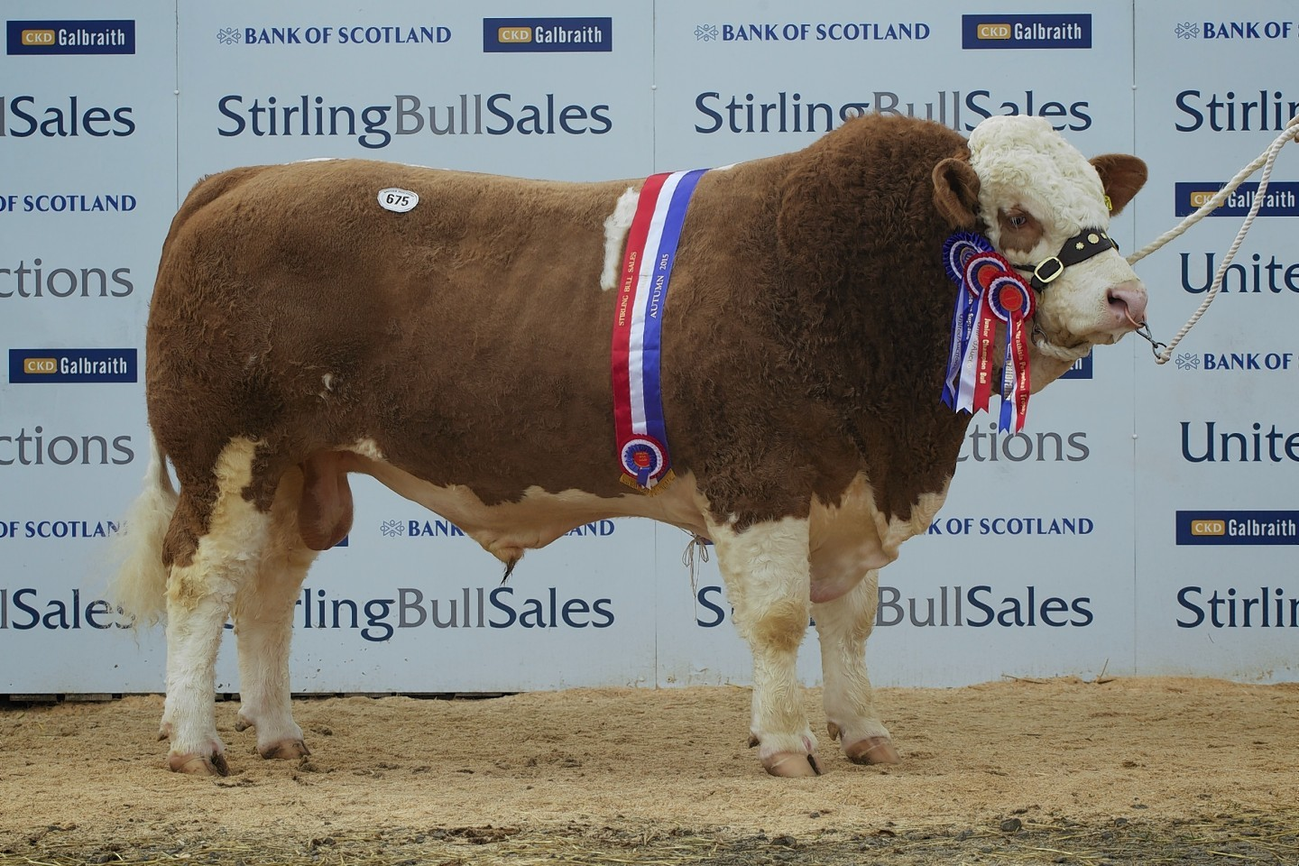 The top priced Simmental from Billy and Anne MacPherson