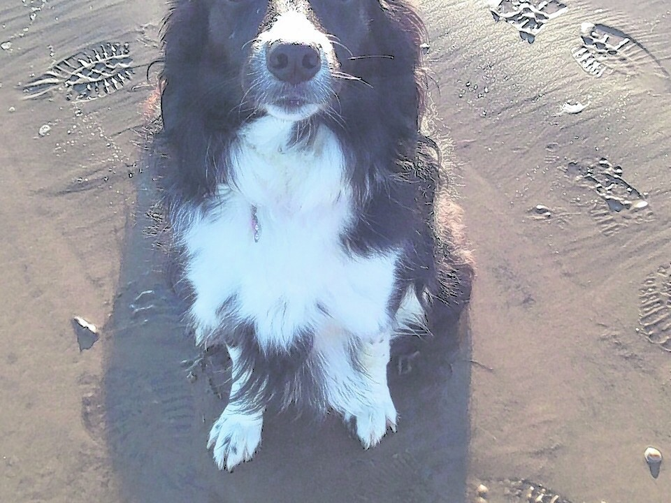 This is Emmy the Border Collie. She lives with Kevin, Lorraine, Sharon and Louise in Macduff.