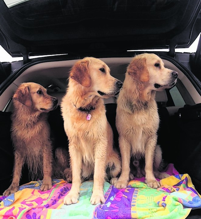 Mum Rosie with daughter Maddie and son Alphie after a swim at Balmedie beach. Rosie lives with Angela Patience in Ellon, Alphie lives with Jaclyn Skinner at Whitecairns and Maddie lives with Michele Skinner at Lairshill, Newmachar.