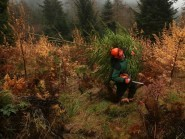Scotland's forests are boosting the economy