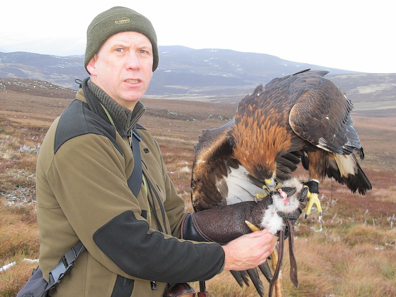 golden eagle dating site He also admitted taking five golden eagle eggs from lewis, scotland, possessing seven golden eagle eggs, taking 12 avocet eggs (the bird used for the rspb emblem) from a nesting site in two tree.