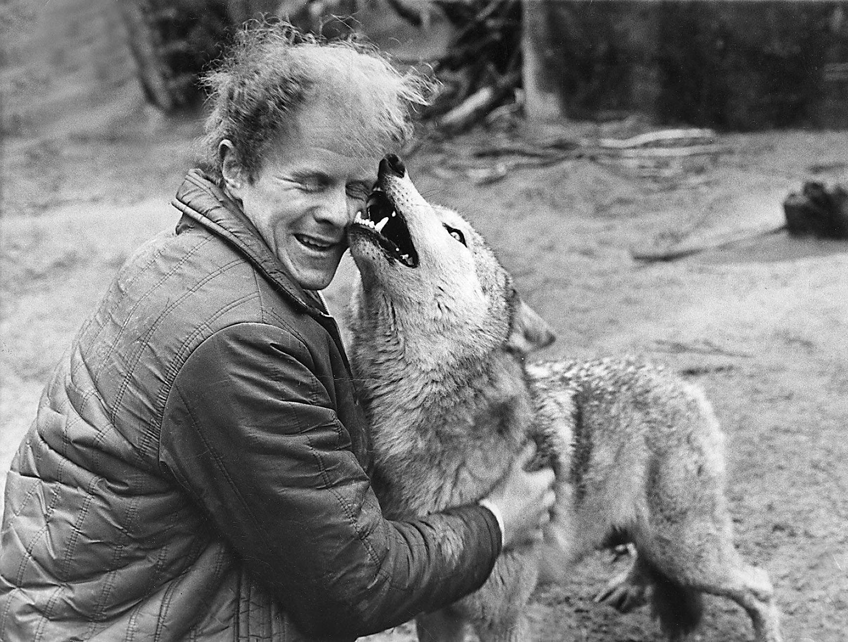 Keeper John Laing gets a big welcome from female wolf Lass.
