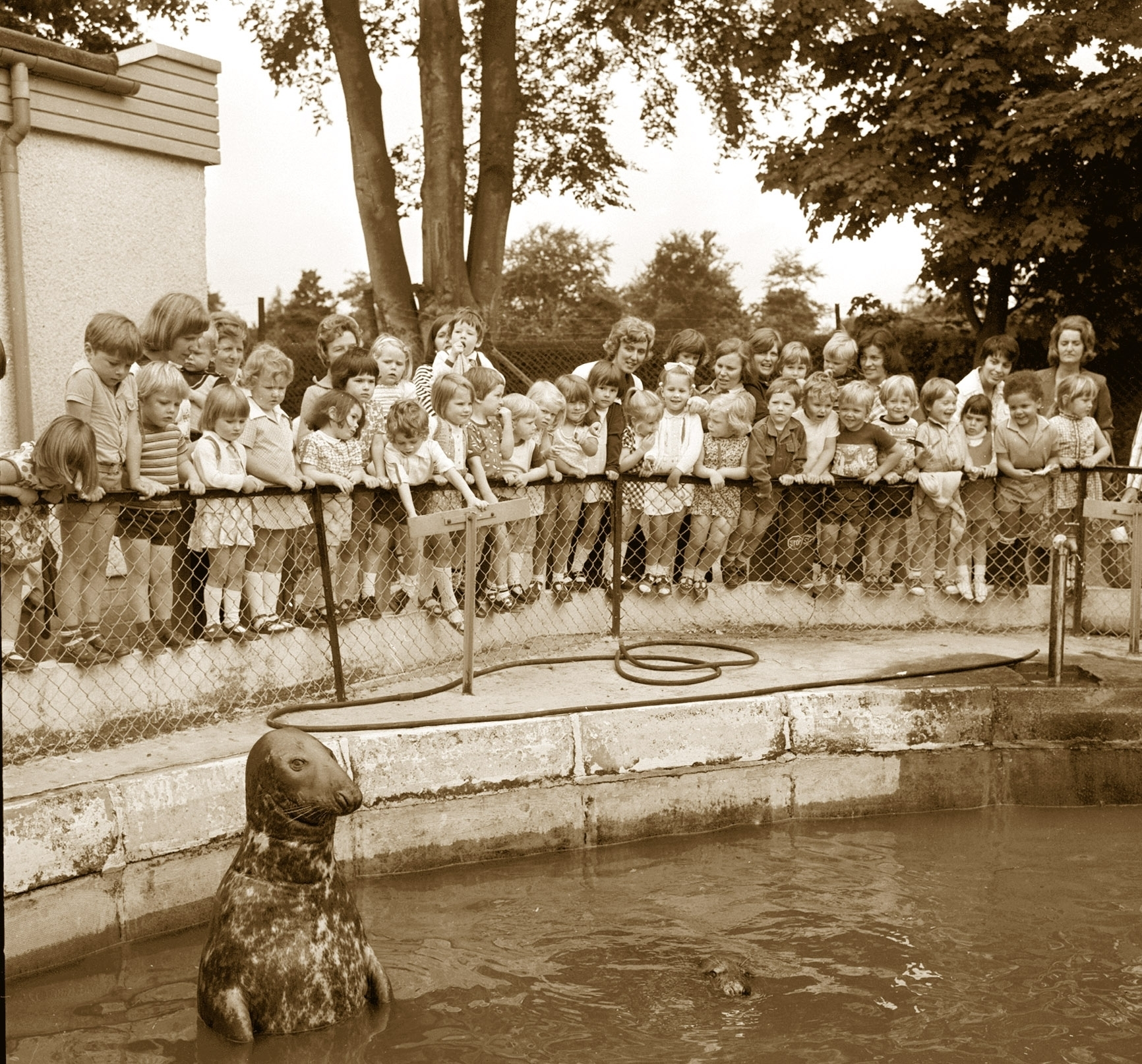 Joining the group for a picture in 1976 was one of the seals at Aberdeen Zoo, Hazlehead. His admirers were the youngsters of St Devenick's Playgroup from Bieldside.
