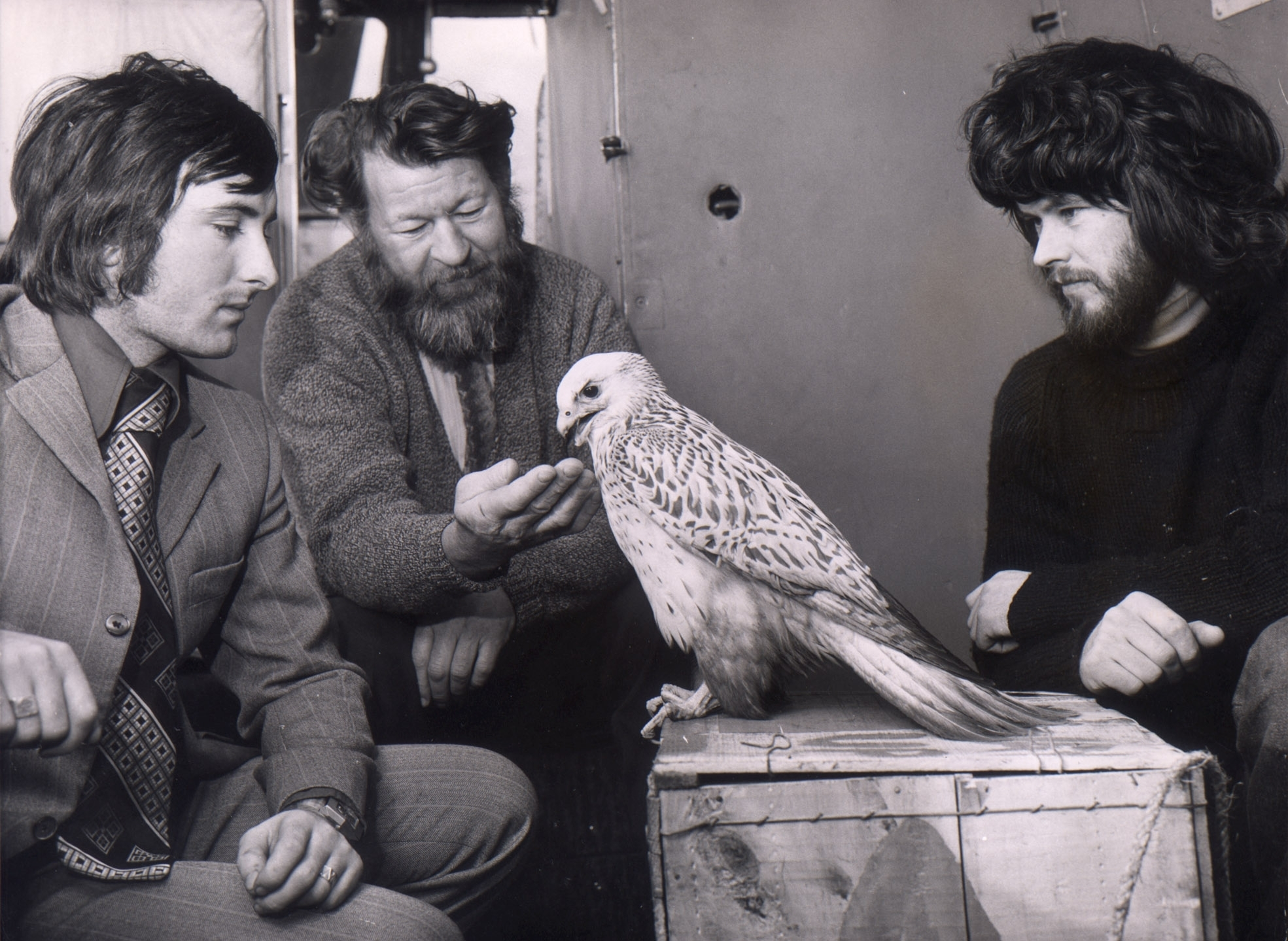 A rare white gyr falcon was found on the rig Ocean Rover in the Forties Field, exhausted and poisoned by oil in 1975. The bird was flown by helicopter to Aberdeen Airport. The falcon was checked over by George Leslie of Aberdeen Zoo with Bob Baxter, left, who helped rescue the bird on the rig. It was to be released into the wild again.