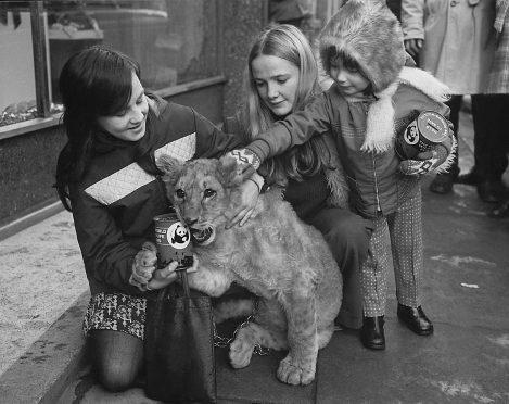 Aberdeen zoo in 1974