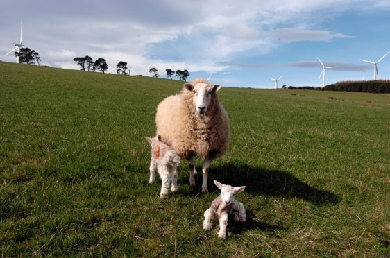 The campaign was launched to coincide with lambing time.