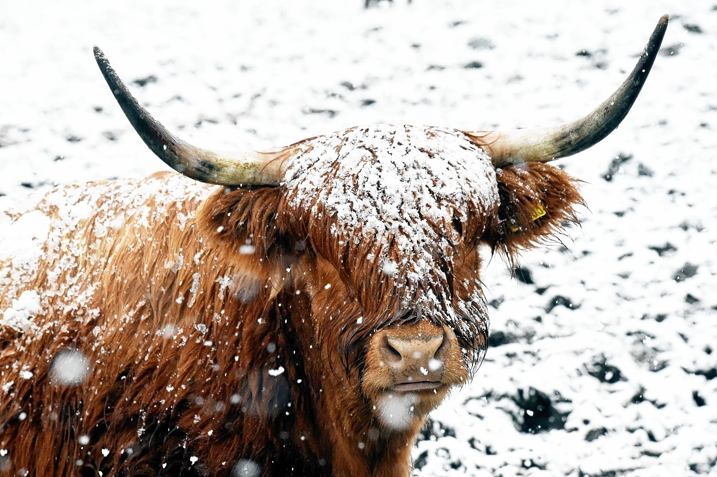 Snow Only Just Melting But More On The Way For North East