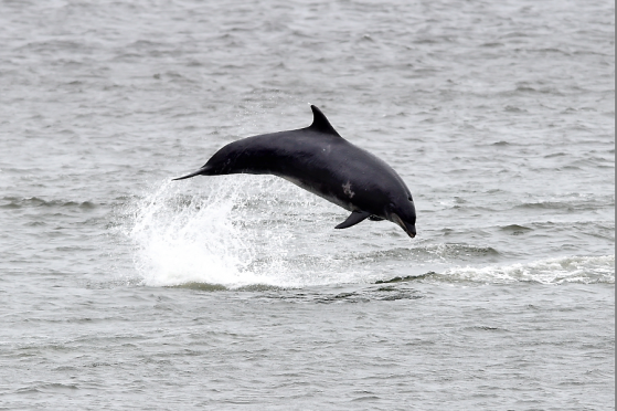 Dolphins at Aberdeen harbour