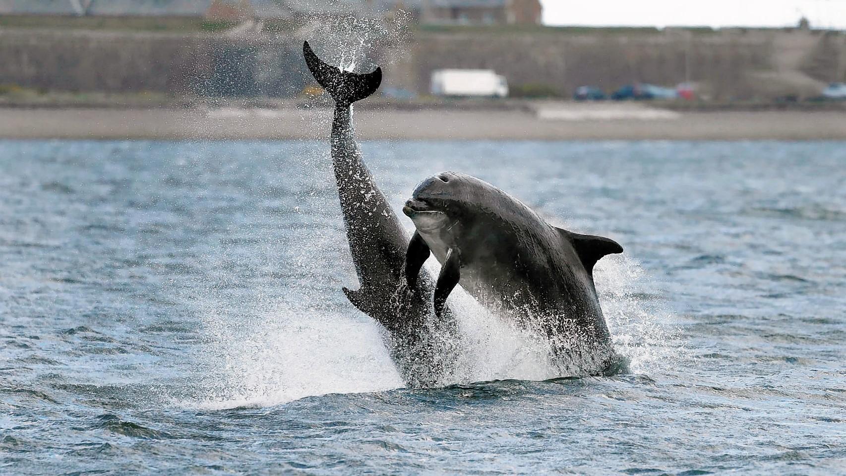 dolphin dating website dating en libra mand yahoo